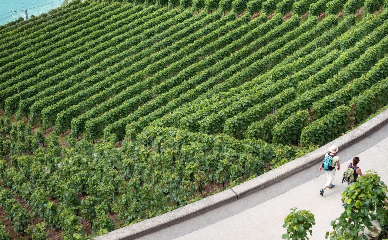 Vineyards in Lausanne